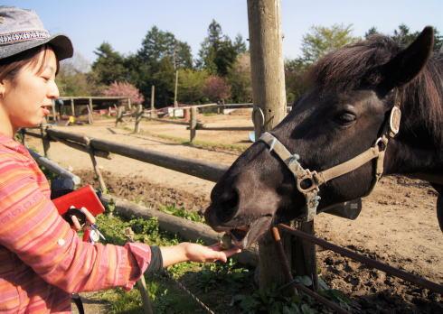世羅高原ファームランド・岡田牧場、馬やヤギとの触れ合いも