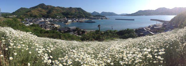因島 除虫菊 パノラマ画像