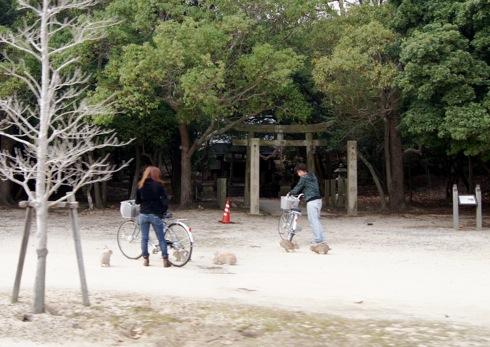 大久野島 のビジターセンターそば