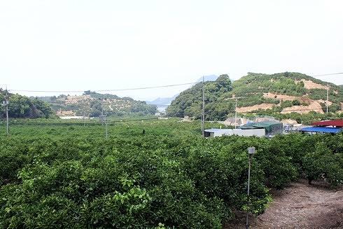 瀬戸田は柑橘の島