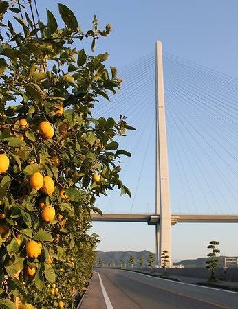 瀬戸田 レモン谷の写真1