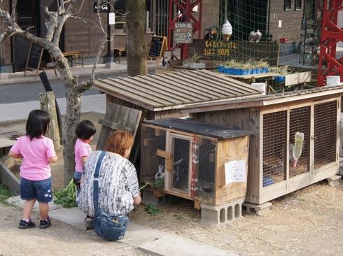 カドーレ 上ノ原牧場のうさぎ小屋の写真