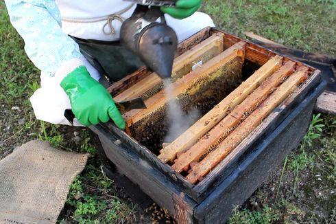 光源寺養蜂園でミツバチ見学