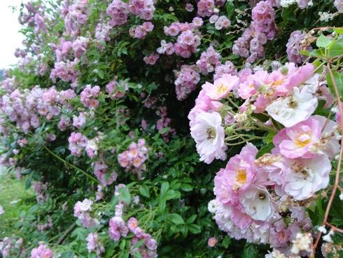 吉和 ミントハウスの花の画像