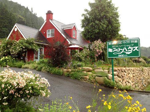 ミントハウス、花に囲まれた ハーブティーのお店