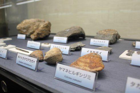岩石と鉱物の展示室 貝の化石も