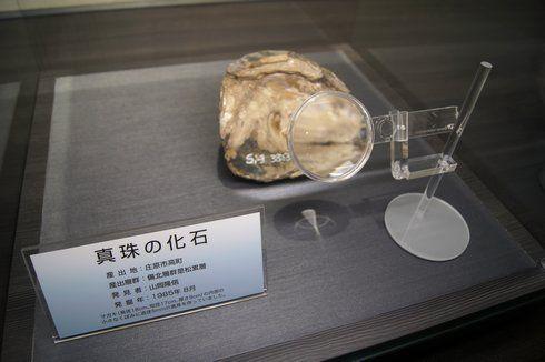 真珠の化石