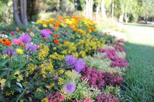 湧永庭園 庭園の花2