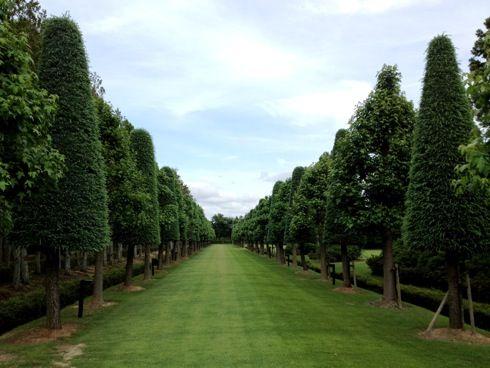 湧永庭園 並木と芝