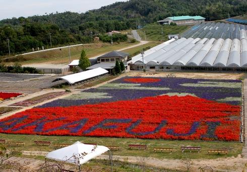世羅ゆり園に赤富士が出現!サルビア・ケイトウで描いた花絵