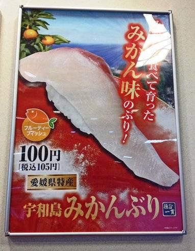 みかんブリ、宇和島産のみかんブリをくら寿司で提供中