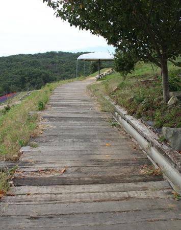 世羅ゆり園 天望の丘への道