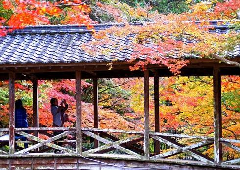 佛通寺の紅葉が見事!参道のモミジも映える紅葉の名所