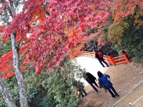 紅葉谷公園 2013 紅葉の様子
