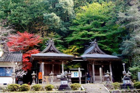 今高野山 紅葉の画像4