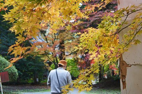 今高野山 紅葉の画像5