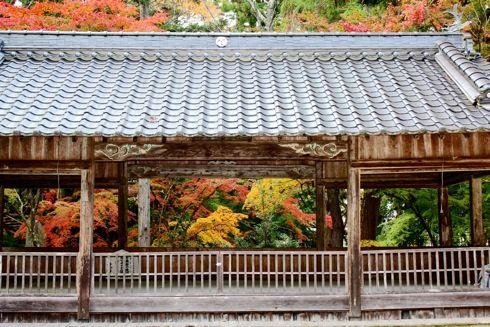 今高野山 紅葉の画像3