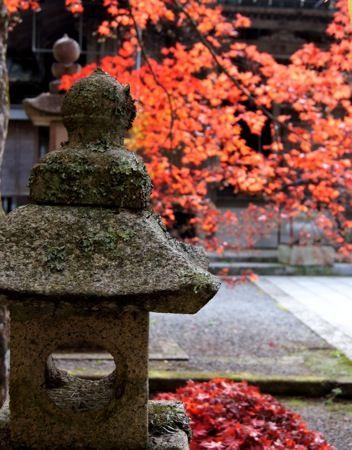 今高野山 紅葉の画像7