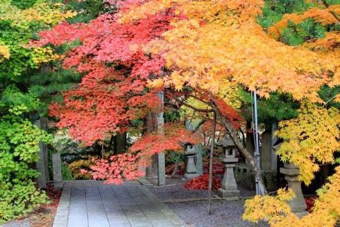 今高野山は 紅葉の隠れた名所、もみじの美しさ際立つお寺の風景