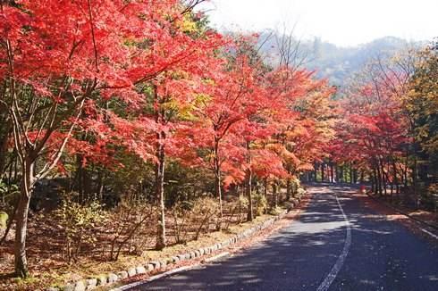 大竹市 三倉岳の麓、紅葉で色づく