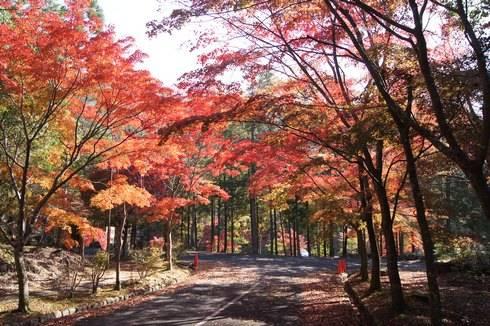 三倉岳 紅葉が綺麗に色づく