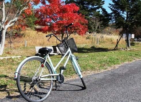 もみのき森林公園、紅葉の園内を自転車さんぽ
