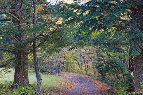 もみのき森林公園 散策コース