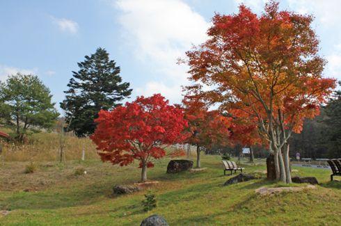 もみのき森林公園 紅葉の写真2