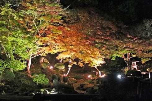 尾関山公園の 紅葉ライトアップ 画像8