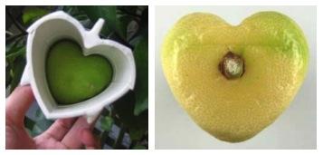 ハート型のレモン 3Dプリンター