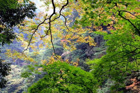 三段峡 紅葉の様子2