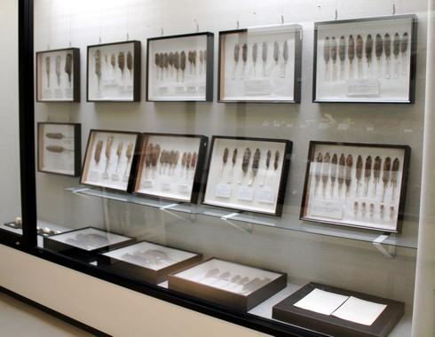 モグラ博物館(比和自然科学博物館) 画像13