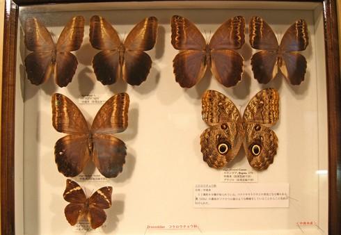 モグラ博物館(比和自然科学博物館) 画像9