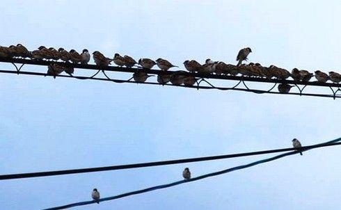 一列に並ぶ、スズメたち