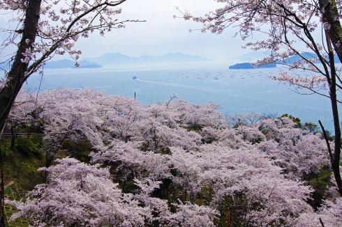安芸津 正福寺山公園、桜と瀬戸内海を見下ろす絶景スポット