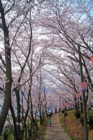 安芸津 正福寺山公園 画像2