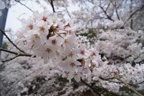 安芸津 正福寺山公園 画像8