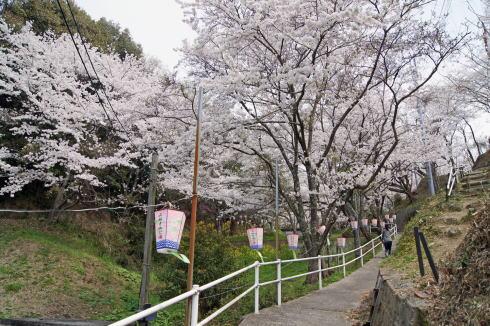 安芸津 正福寺山公園 画像1