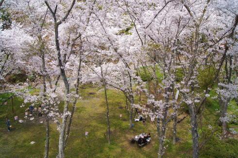 安芸津 正福寺山公園 画像5