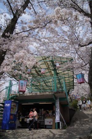 安芸津 正福寺山公園 画像