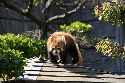 安佐動物園、大規模リニューアル計画!カピバラなどの新エリア