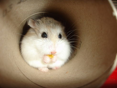 かわいい 幼い動物の写真 画像9