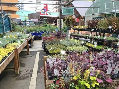 草花の種類がとにかく多い、己斐ガーデンスクエア