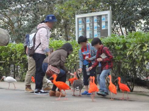 松江フォーゲルパーク 鳥に餌やり