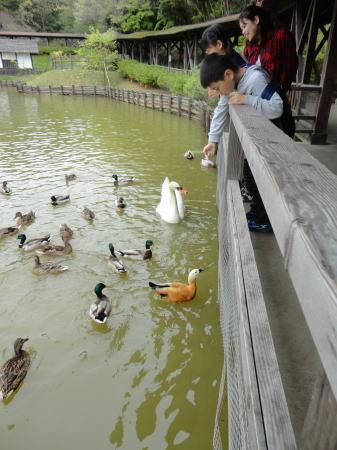 松江フォーゲルパーク 園内画像3