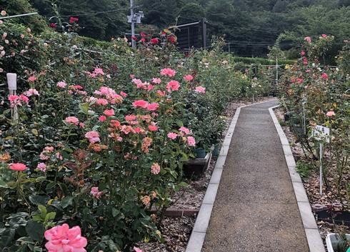 福山SA(上り線) バラ園とウェルカムゲート