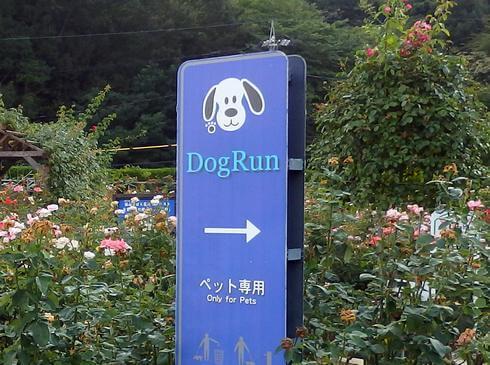 福山サービスエリア上り線に、犬も休憩スポット「ドッグラン」