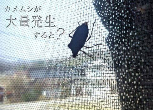 カメムシ大量発生、今年の冬は大雪?広島県注意報