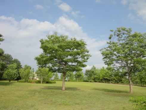 県立みよし公園 多目的広場