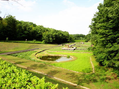 県立みよし公園しょうぶ園